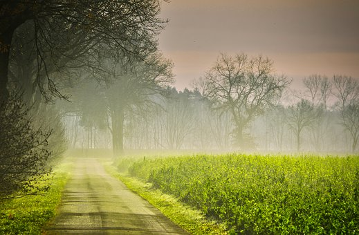Road beside green, foggy field leading up to a woody area